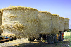 Bales of straw. Wagon with bales of straw. Harvest in countryside Royalty Free Stock Photos