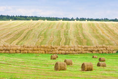Bales of straw on the autumn. Field Royalty Free Stock Image