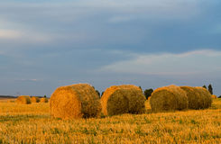Bales of straw on a compressed field Royalty Free Stock Photos