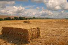 Bales of Straw in an English Landscape. Freshly cut Bales of Straw in an English Rural Landscape Royalty Free Stock Photos