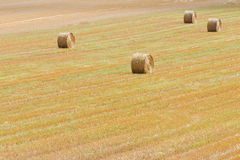Bales of straw on a field Royalty Free Stock Image