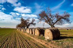 Bales of straw in the field Stock Photography
