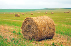 Bales of straw on the field Royalty Free Stock Images