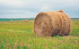 Bales of straw on the field Stock Photos