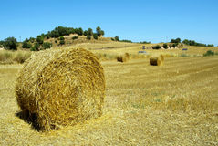 Bales of straw on the field. Straw bales in a field of Conesa (Tarragona) in Spain Stock Photos