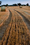 Bales of straw in field Stock Images
