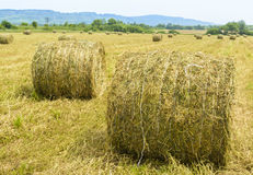 Bales of straw. Field with round bales of straw in Romania stock image