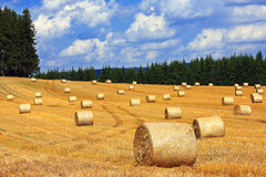 Bales of straw in field between woods stock photos