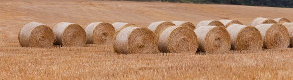 Bales of straw after harvest Stock Image