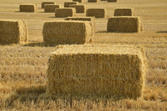 Bales of straw. After harvest in a field in Denmark stock photography