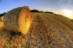 Bales of straw after harvest grain at sunset Stock Images