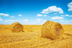 Bales of a straw on harvested field in summer Stock Photos