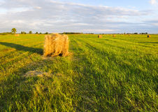 Bales of straw left in the countryside. Summer fields,  fields in Germany Stock Images