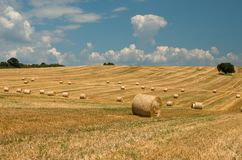 Bales of straw. Levels with bales. Bales of straw. Levels after the harvest, with bales of straw Stock Photos