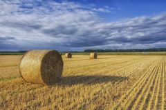 Bales of straw lie on the field after harvest. Fluffy clouds are floating in the blue sky royalty free stock image