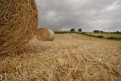 Bales of straw. Trees sky green Stock Photography