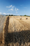Bales of straw in the wheat fields Royalty Free Stock Image