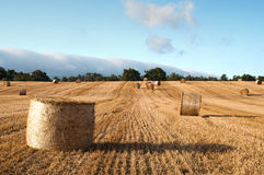 Bales of straw in the wheat fields Stock Photos