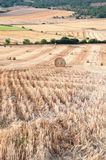 Bales of straw in the wheat fields Royalty Free Stock Images