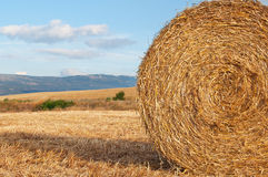 Bales of straw in the wheat fields Stock Image