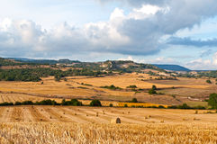 Bales of straw in the wheat fields Stock Photo