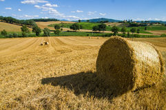 Bales from Tuscany. When the grain is ripe , the harvest begins Royalty Free Stock Photo