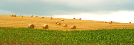 Bales of wheat Royalty Free Stock Image