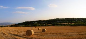 Bales in wheat field. Bales of wheat in rural landscape stock image