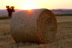 Bales of wheat straws (Triticum spa) contre-jour Stock Photos