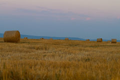 Bales of wheat straws (Triticum spa) at sunset Stock Photos