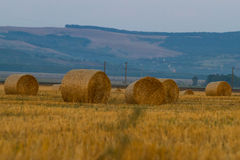 Bales of wheat straws (Triticum spa) at sunset Royalty Free Stock Photo