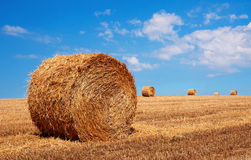 Bales of wheat in summer time Royalty Free Stock Photography