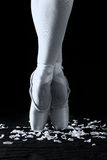 Baletniczego tancerza pozycja na palec u nogi na różanych płatkach z czarnym backg zdjęcie stock