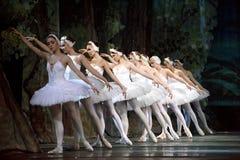 baletniczy jezioro wykonuje królewskiego rosyjskiego łabędź Zdjęcia Stock