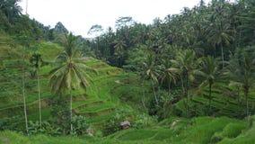 Bali ö indonesia Arkivfoto