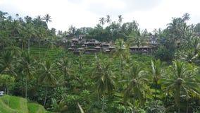 Bali ö indonesia Arkivbilder