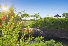 bali Индонесия Взгляд от окна на цветя тропических кустах и море стоковая фотография rf