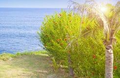 bali Индонесия Взгляд от окна на цветя тропических кустах и море стоковые изображения rf