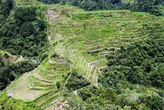 bali Индонесия сфотографировал террасу риса Стоковые Изображения