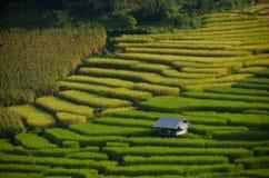 bali Индонесия сфотографировал террасу риса Стоковые Изображения RF
