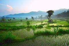 Bali stockfotos