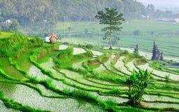 Bali Immagini Stock Libere da Diritti