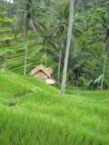 Bali auf den Terrassen stockfoto
