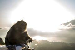 Bali Batur małpy widoku Jeziorny zmierzch Gunung Agung Zdjęcia Stock
