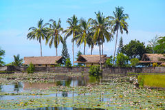 Bali. Beautiful landscape with views of the Lotus pond Royalty Free Stock Photography