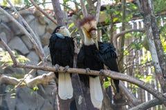 Bali bird park hornbill. Bali bird park and reptile park Stock Images