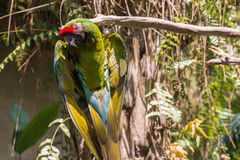 Bali bird park parrot Royalty Free Stock Photo