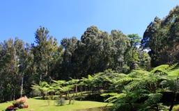 Bali Bontanic Gardens 004 Royalty Free Stock Images