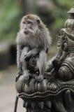 Bali - bosque del mono Imágenes de archivo libres de regalías