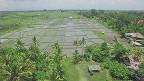 Bali Coast Palms With Rice Fields Aerial 4k stock video footage